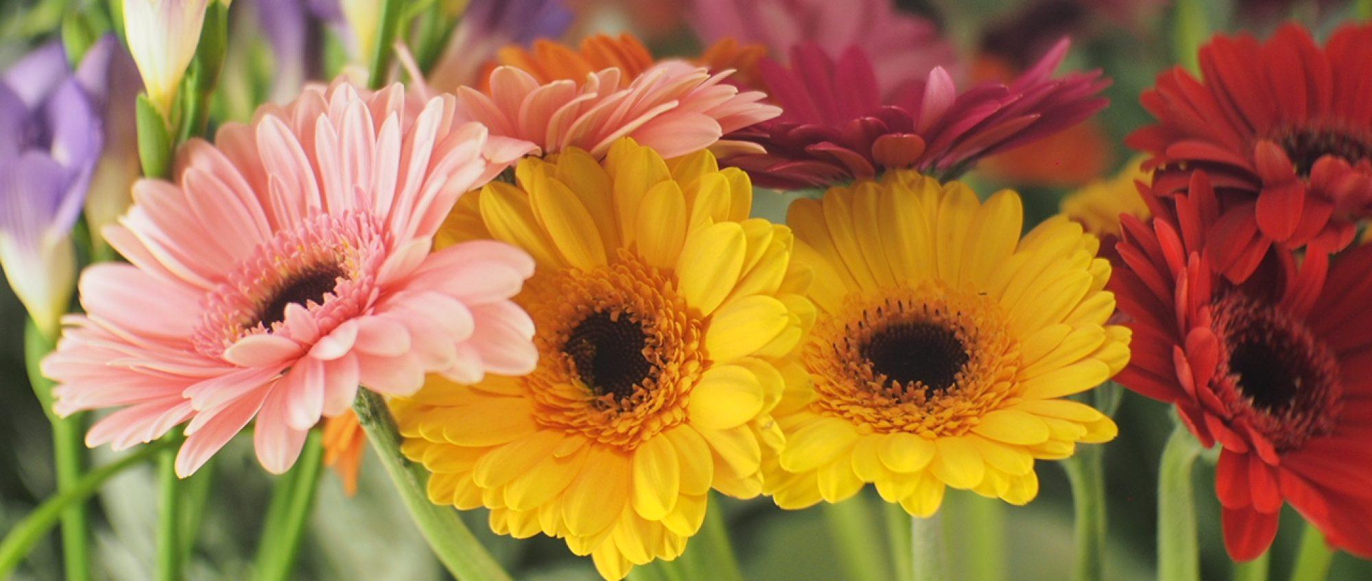 Kukka-Riitta